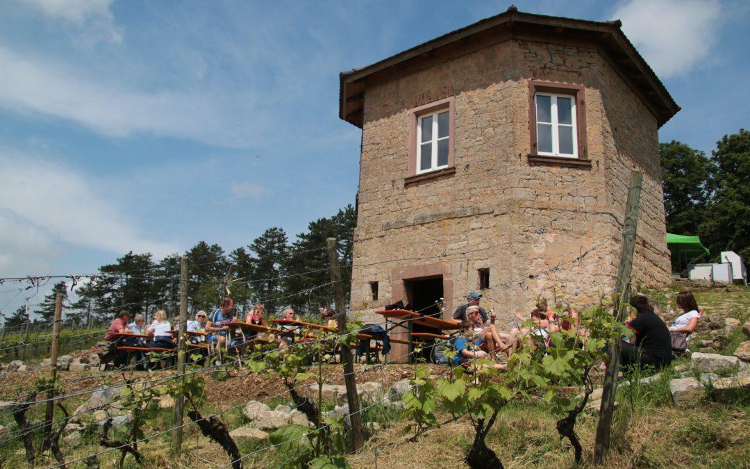 Weinfest im Weinberg  von Schloss Saaleck