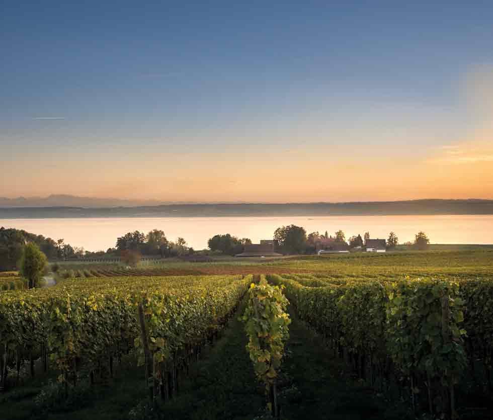 Weingut Aufricht am Bodensee - Winzer, Weinbau und Weine in Deutschland