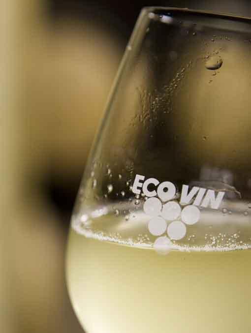 Weinlese 2017 - der Start. Junger Wein