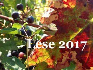 Herbstlaub_lese 217