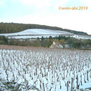 Die Weinberge der Cote d'Or (Burgund=) im Winter