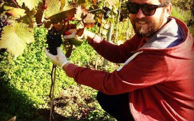 Neue Wege des Online-Weinhandels: die WeinKollektion von Loic Carlier.